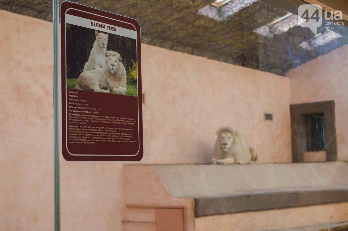 """Вояж по зоопарку """"12 месяцев"""": экзотические животные, большой бассейн и сказочный дворец, фото-11"""