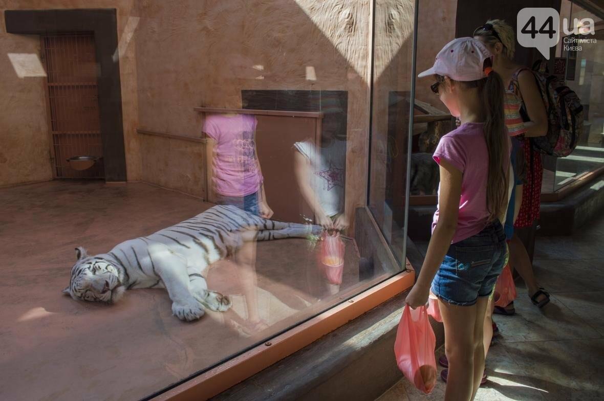 """Вояж по зоопарку """"12 месяцев"""": экзотические животные, большой бассейн и сказочный дворец, фото-13"""