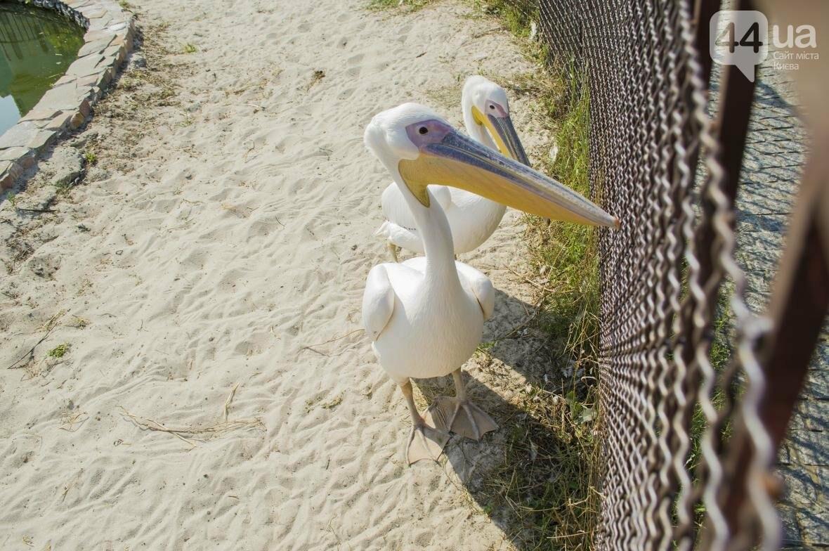 """Вояж по зоопарку """"12 месяцев"""": экзотические животные, большой бассейн и сказочный дворец, фото-16"""