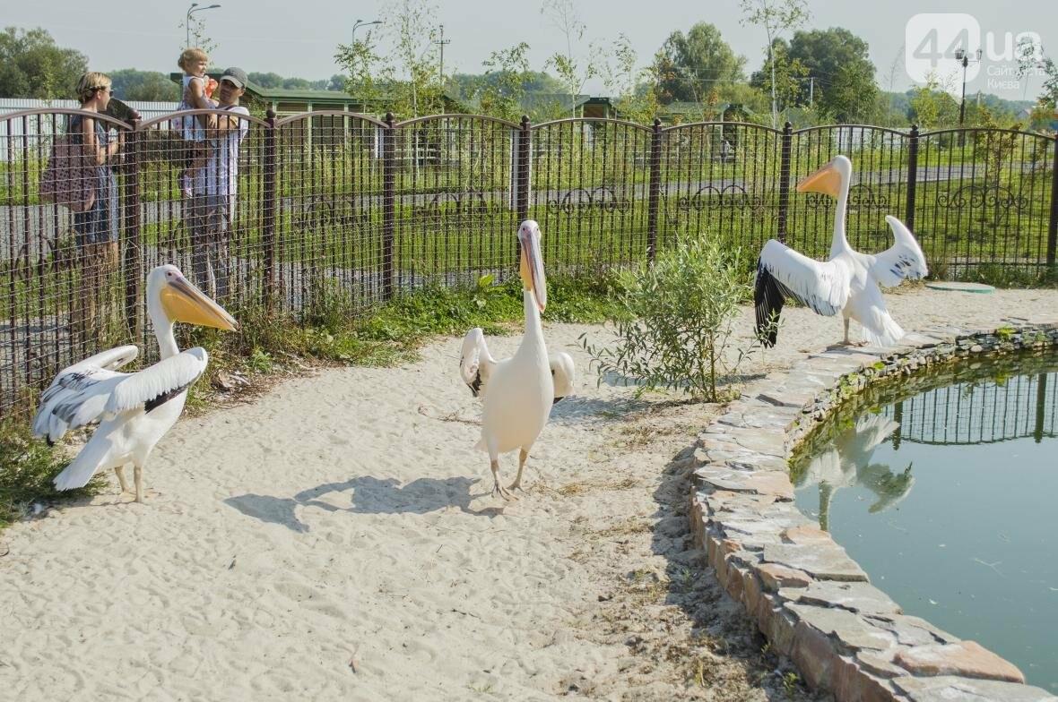 """Вояж по зоопарку """"12 месяцев"""": экзотические животные, большой бассейн и сказочный дворец, фото-15"""