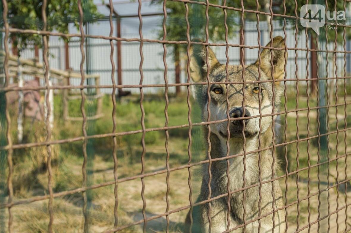 """Вояж по зоопарку """"12 месяцев"""": экзотические животные, большой бассейн и сказочный дворец, фото-3"""