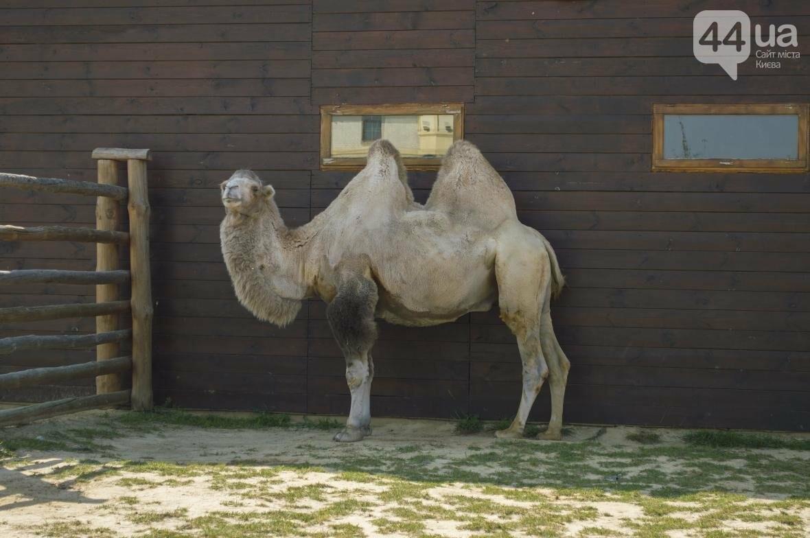 """Вояж по зоопарку """"12 месяцев"""": экзотические животные, большой бассейн и сказочный дворец, фото-22"""