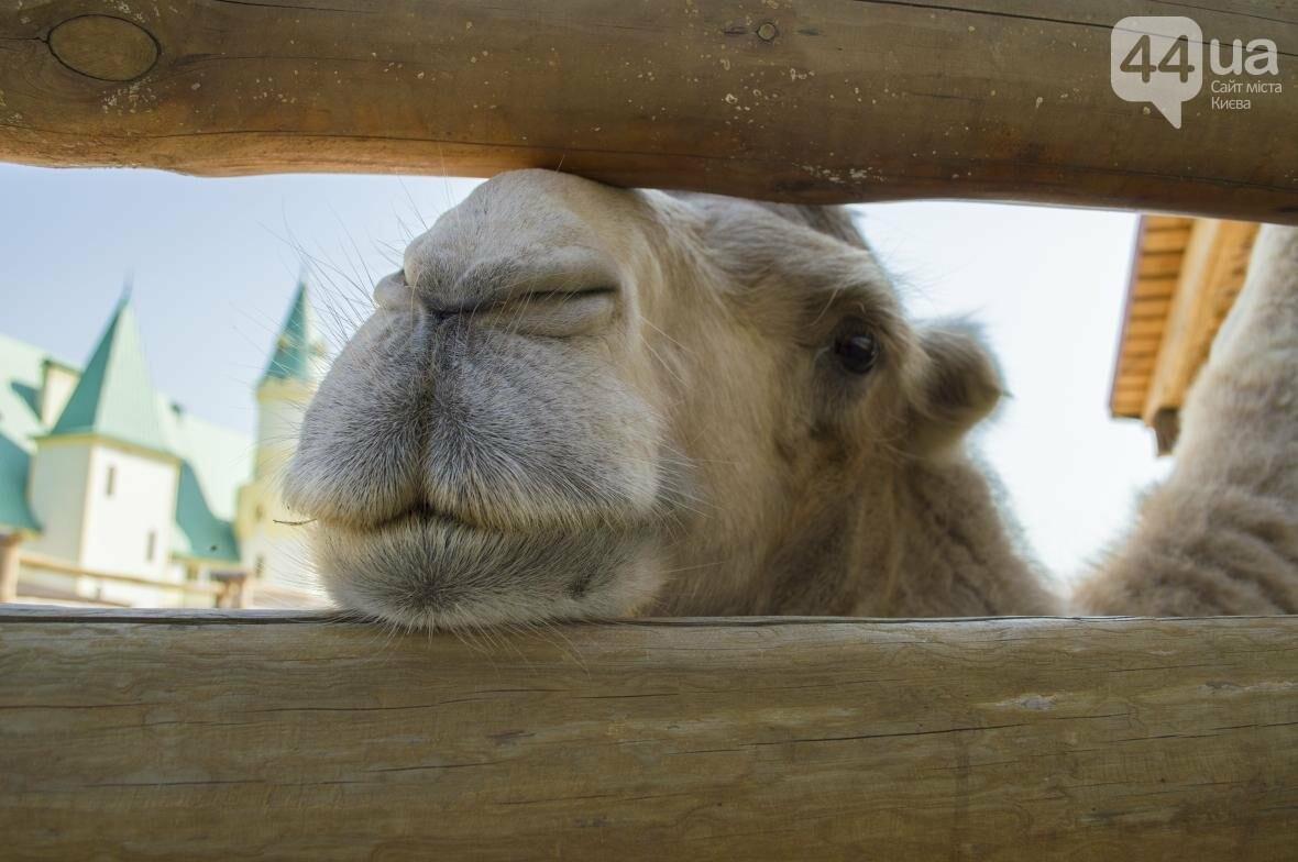"""Вояж по зоопарку """"12 месяцев"""": экзотические животные, большой бассейн и сказочный дворец, фото-23"""
