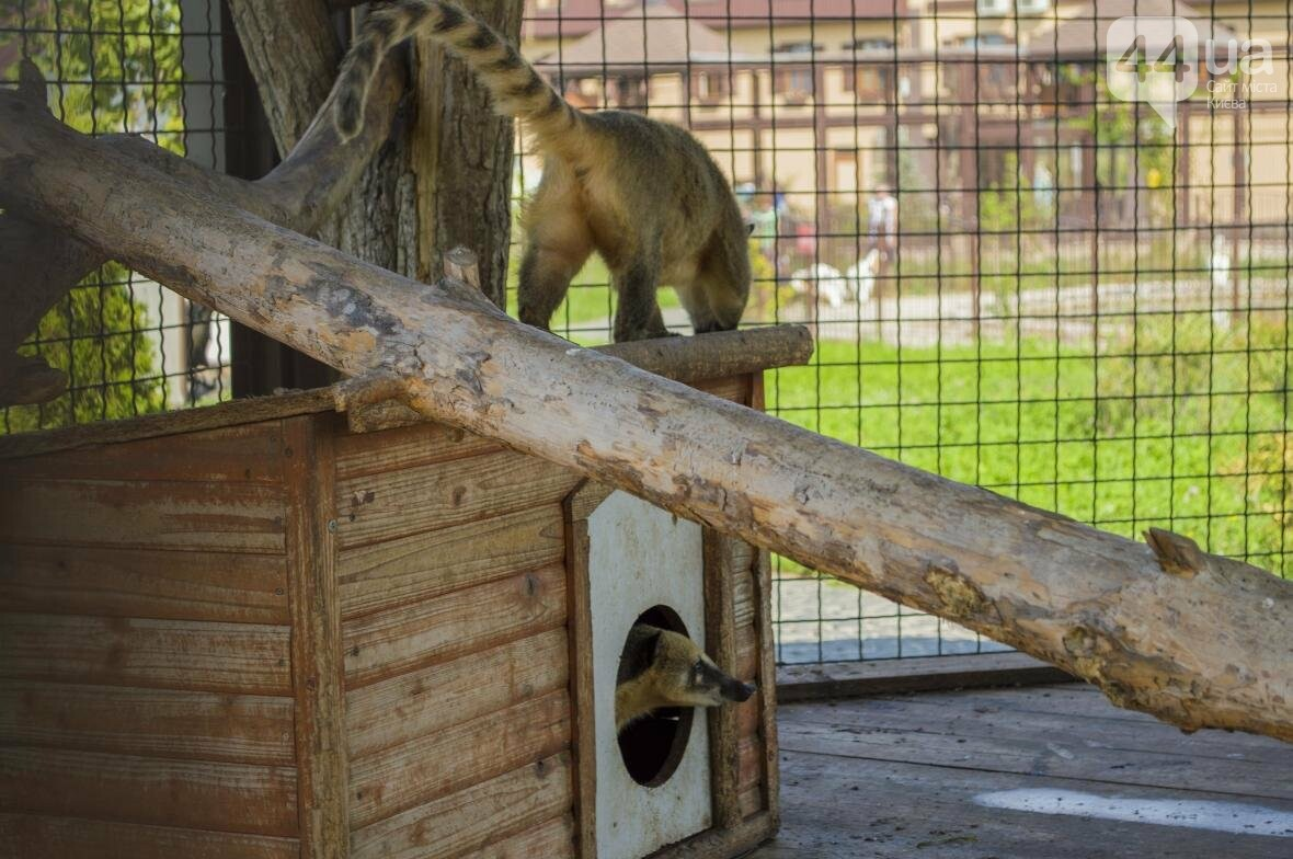 """Вояж по зоопарку """"12 месяцев"""": экзотические животные, большой бассейн и сказочный дворец, фото-17"""