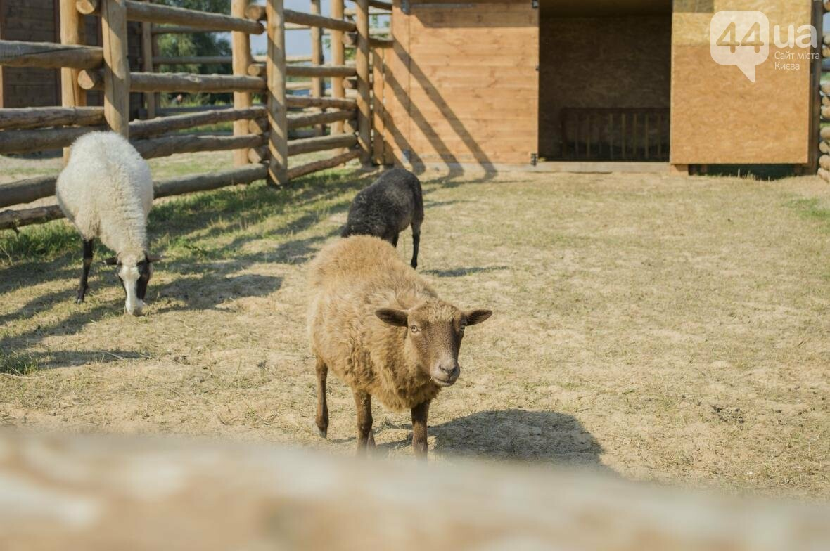"""Вояж по зоопарку """"12 месяцев"""": экзотические животные, большой бассейн и сказочный дворец, фото-4"""