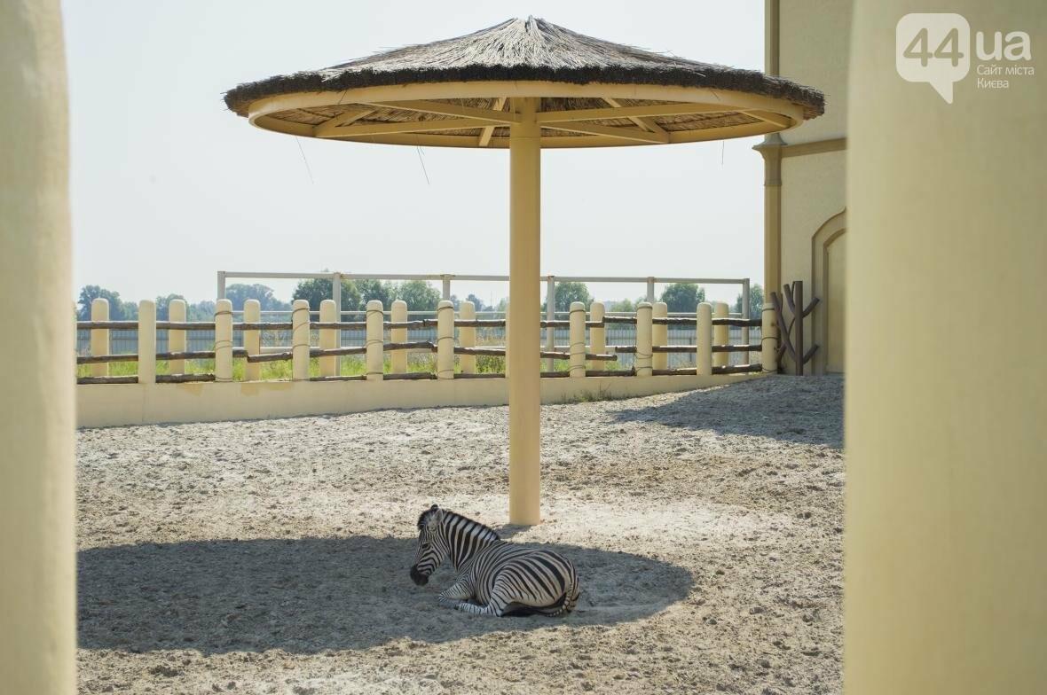 """Вояж по зоопарку """"12 месяцев"""": экзотические животные, большой бассейн и сказочный дворец, фото-24"""