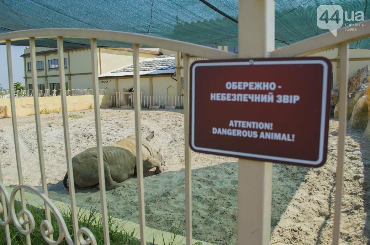 """Вояж по зоопарку """"12 месяцев"""": экзотические животные, большой бассейн и сказочный дворец, фото-25"""