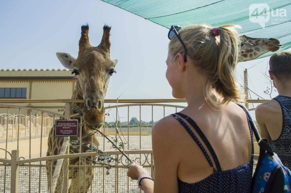 """Вояж по зоопарку """"12 месяцев"""": экзотические животные, большой бассейн и сказочный дворец, фото-28"""