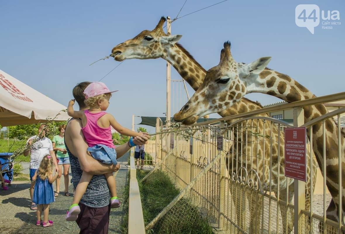 """Вояж по зоопарку """"12 месяцев"""": экзотические животные, большой бассейн и сказочный дворец, фото-29"""