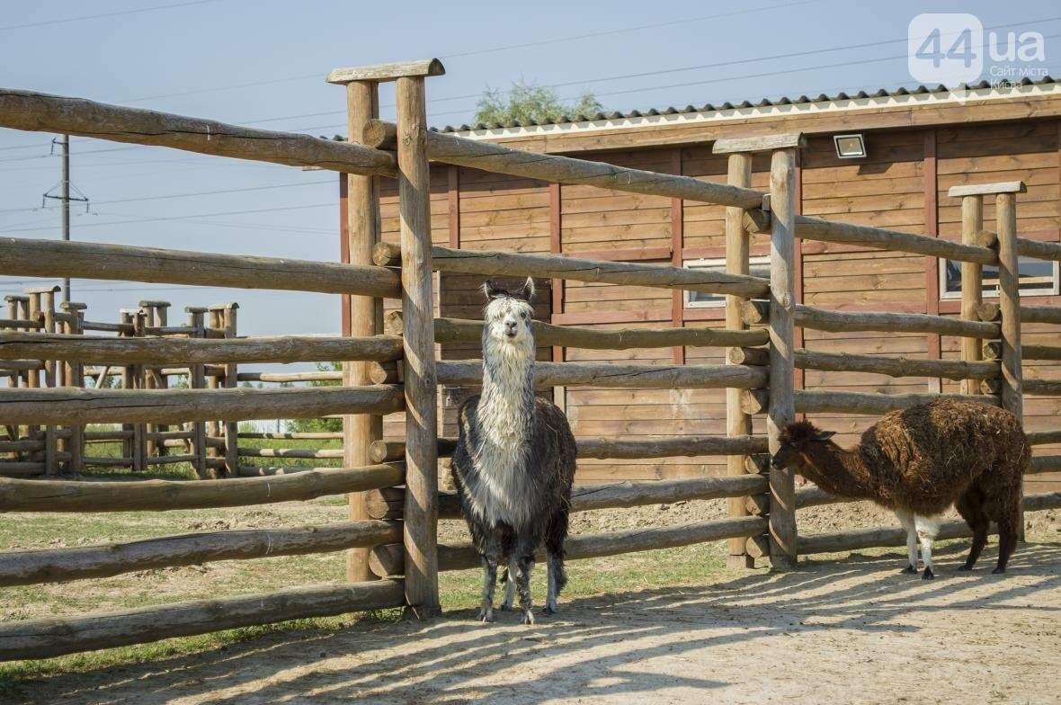 """Вояж по зоопарку """"12 месяцев"""": экзотические животные, большой бассейн и сказочный дворец, фото-5"""