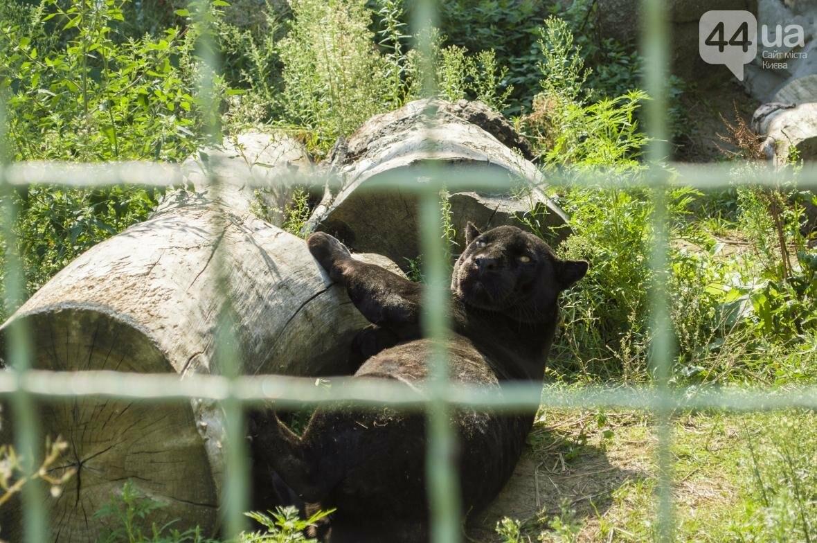 """Вояж по зоопарку """"12 месяцев"""": экзотические животные, большой бассейн и сказочный дворец, фото-7"""
