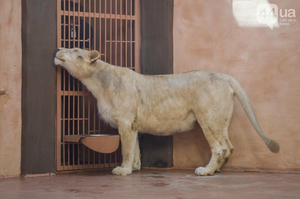 """Вояж по зоопарку """"12 месяцев"""": экзотические животные, большой бассейн и сказочный дворец, фото-10"""