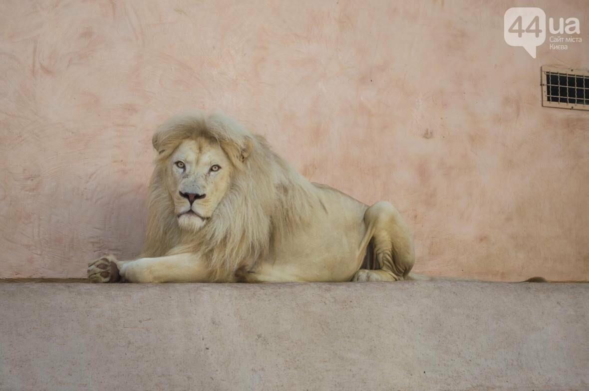 """Вояж по зоопарку """"12 месяцев"""": экзотические животные, большой бассейн и сказочный дворец, фото-12"""