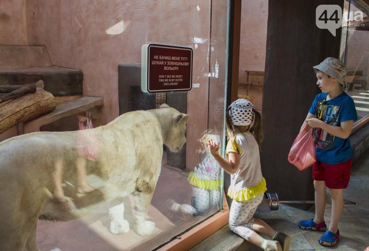 """Вояж по зоопарку """"12 месяцев"""": экзотические животные, большой бассейн и сказочный дворец, фото-8"""