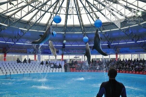 Киевский дельфинарий: трагедия в пяти действиях, фото-1