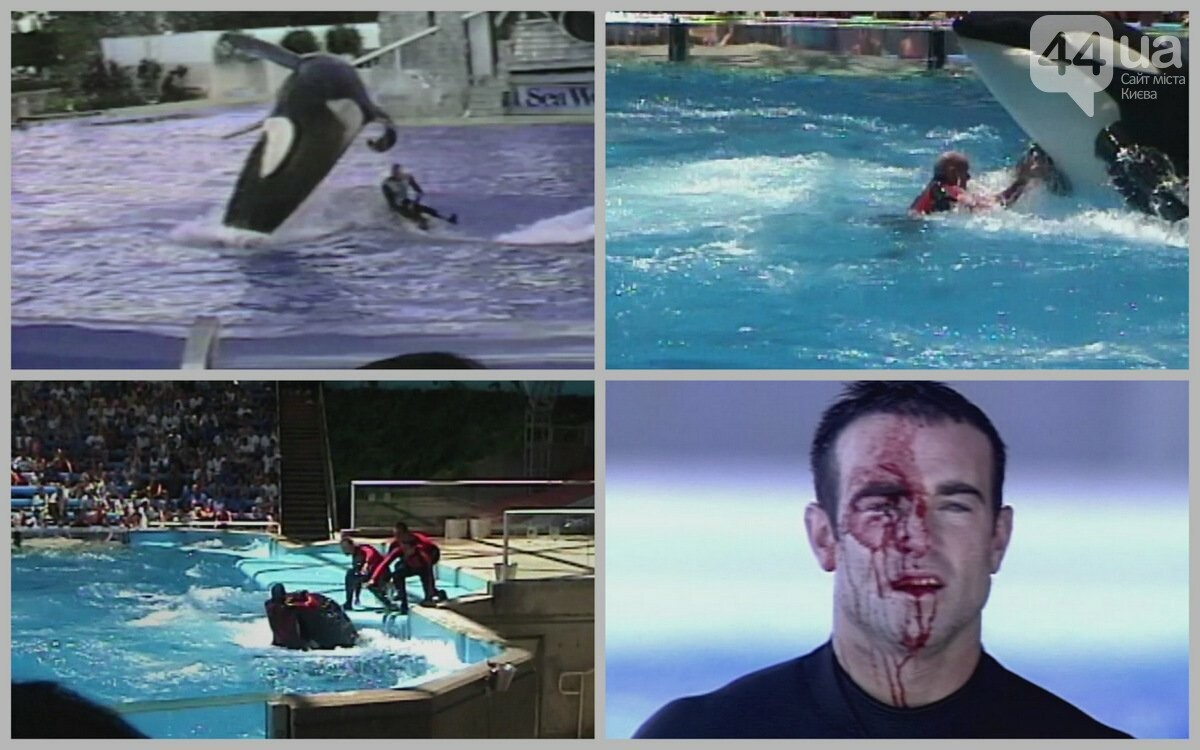 Киевский дельфинарий: трагедия в пяти действиях, фото-4