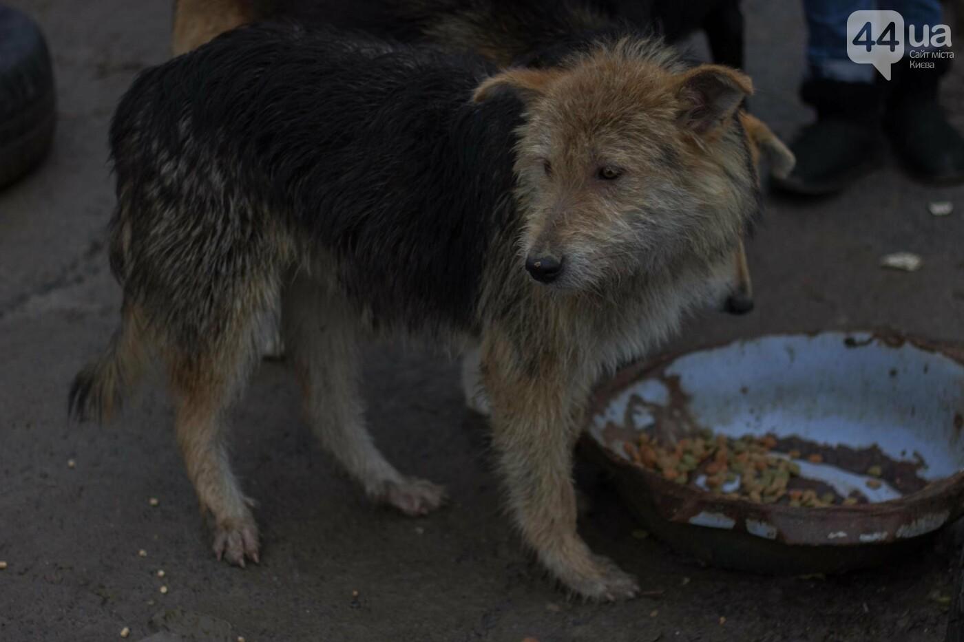 В приюте для животных неизвестные расстреливают и калечат собак, фото-1