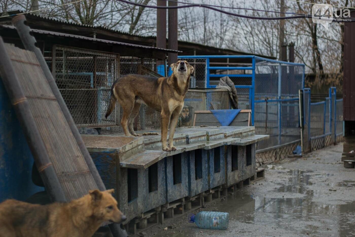 В приюте для животных неизвестные расстреливают и калечат собак, фото-18