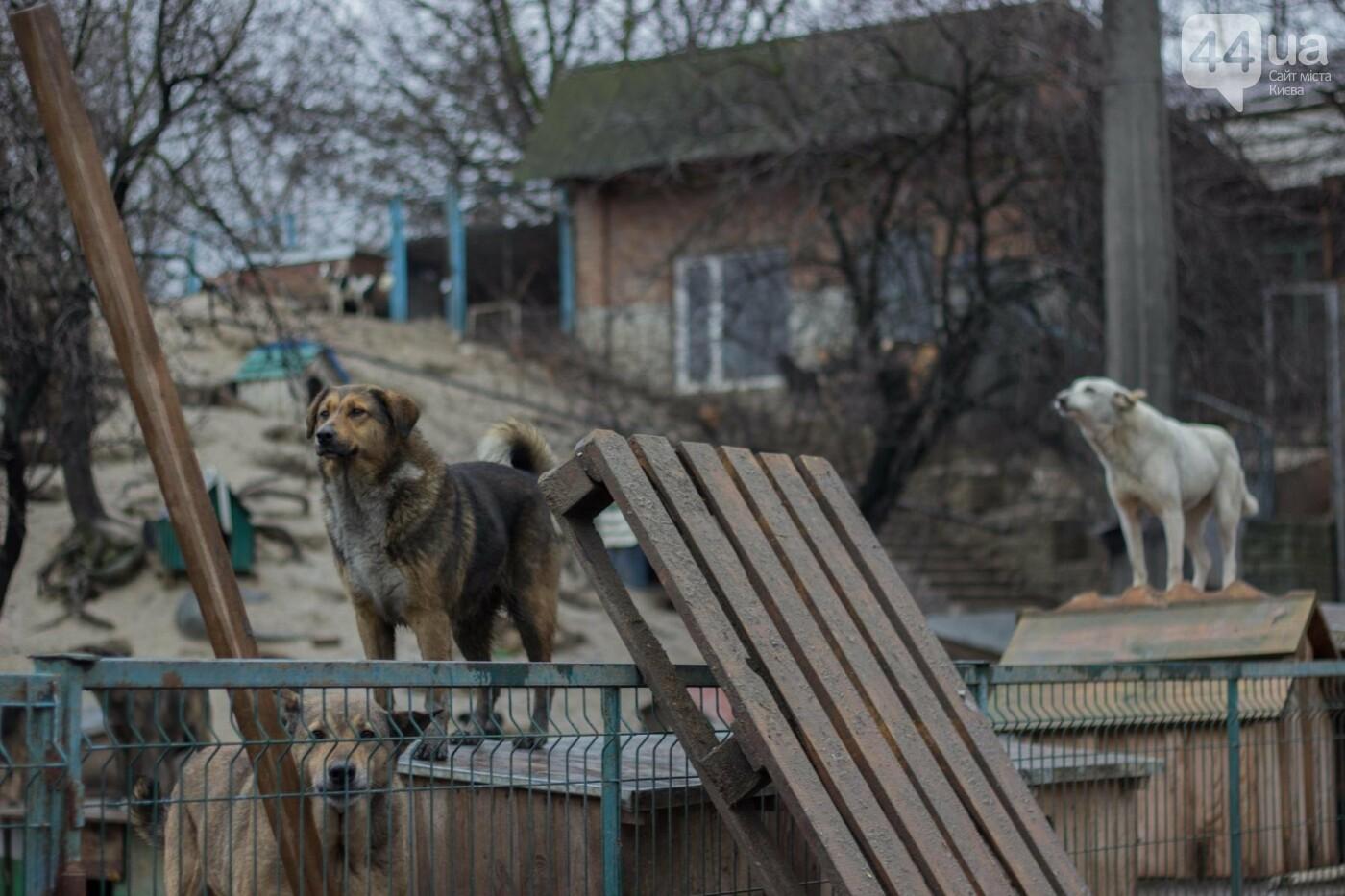 В приюте для животных неизвестные расстреливают и калечат собак, фото-14