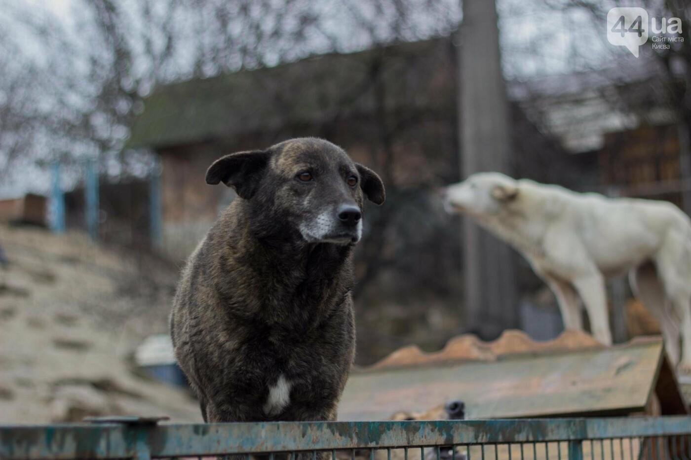 В приюте для животных неизвестные расстреливают и калечат собак, фото-13
