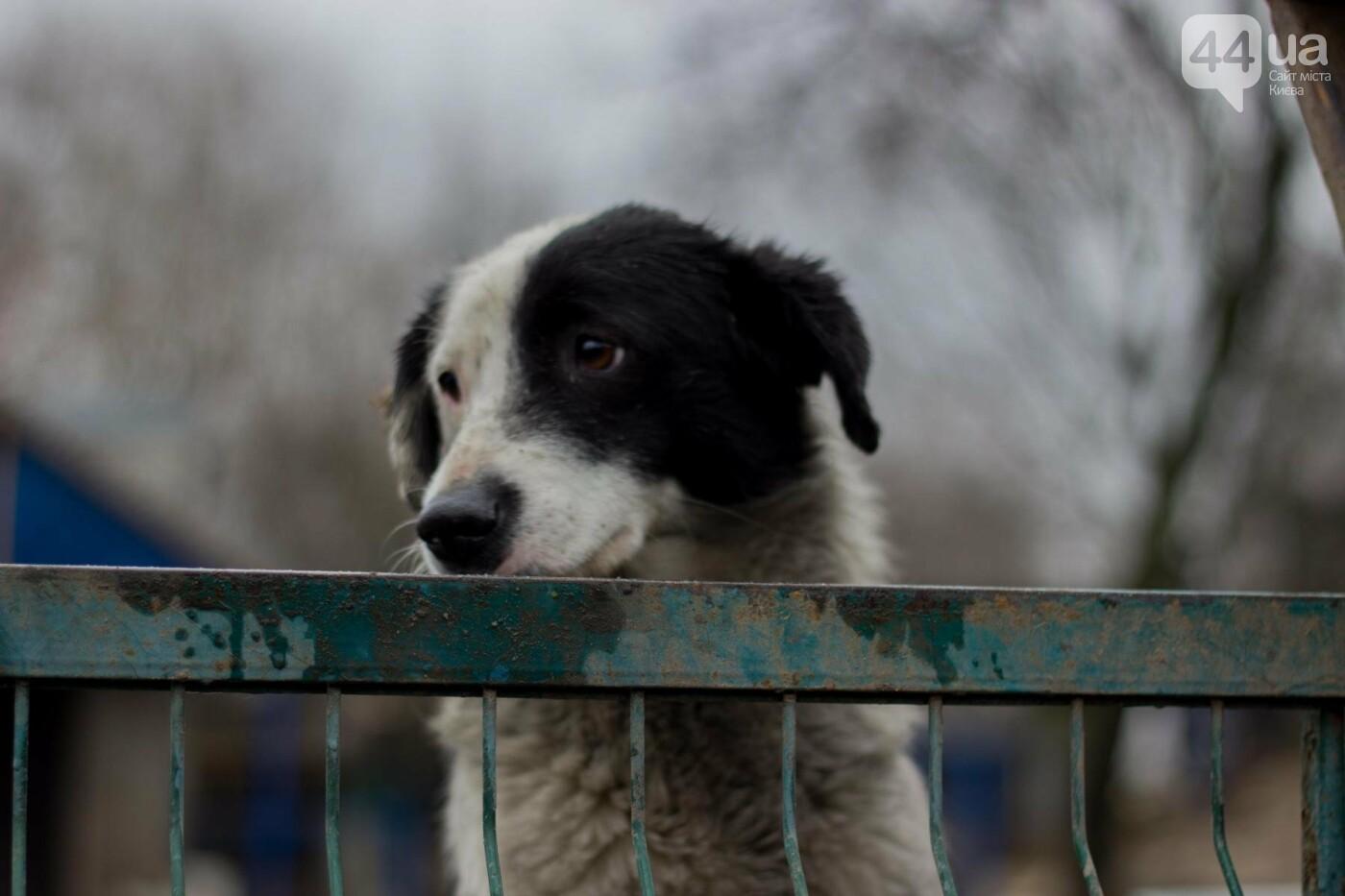 В приюте для животных неизвестные расстреливают и калечат собак, фото-5
