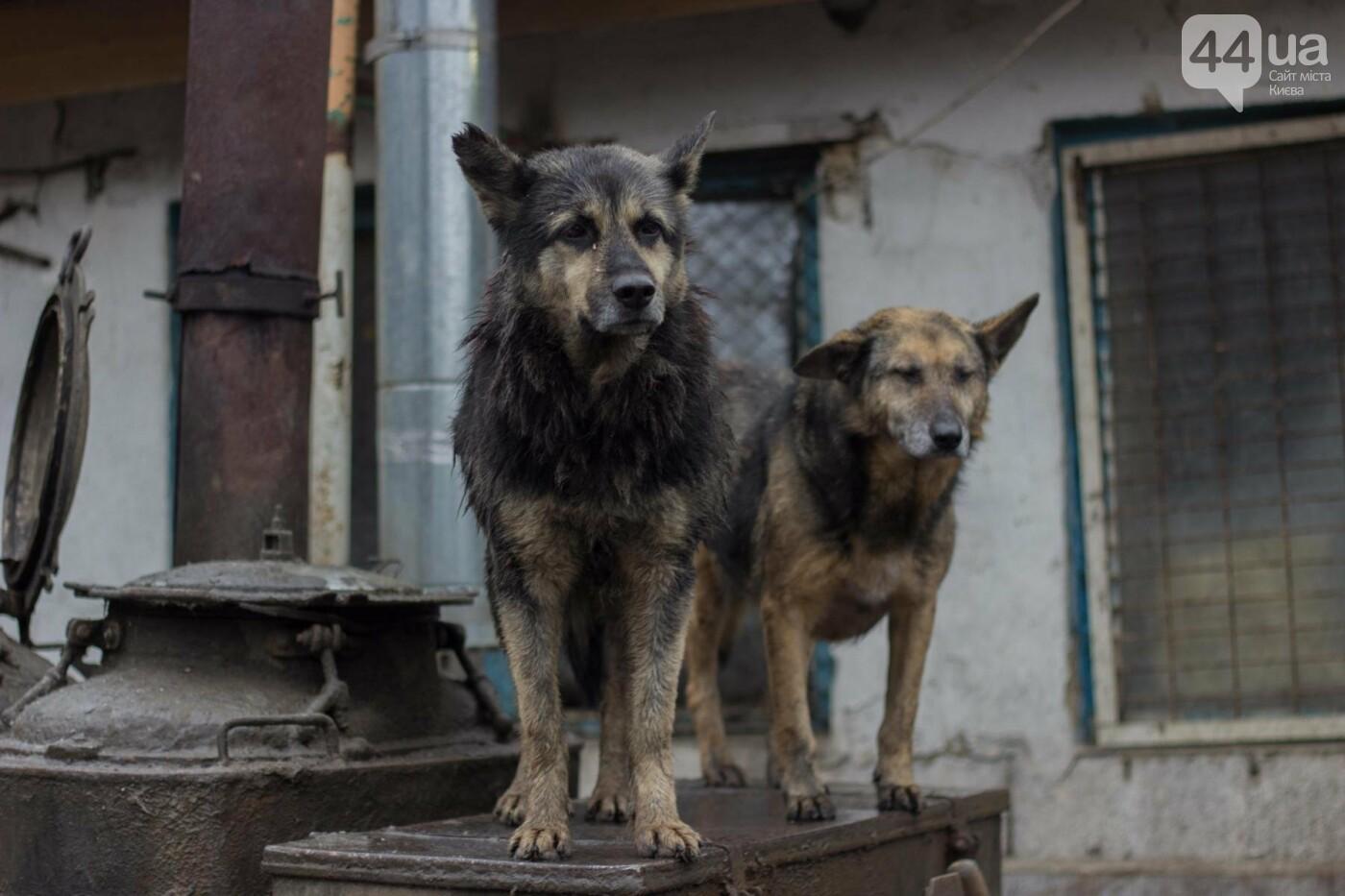 В приюте для животных неизвестные расстреливают и калечат собак, фото-7