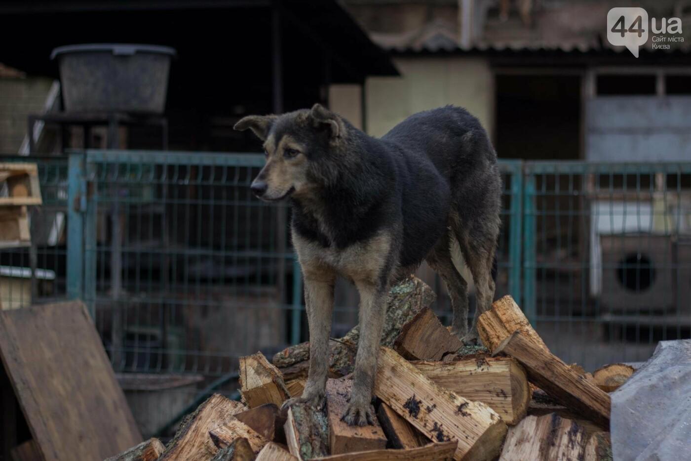В приюте для животных неизвестные расстреливают и калечат собак, фото-8