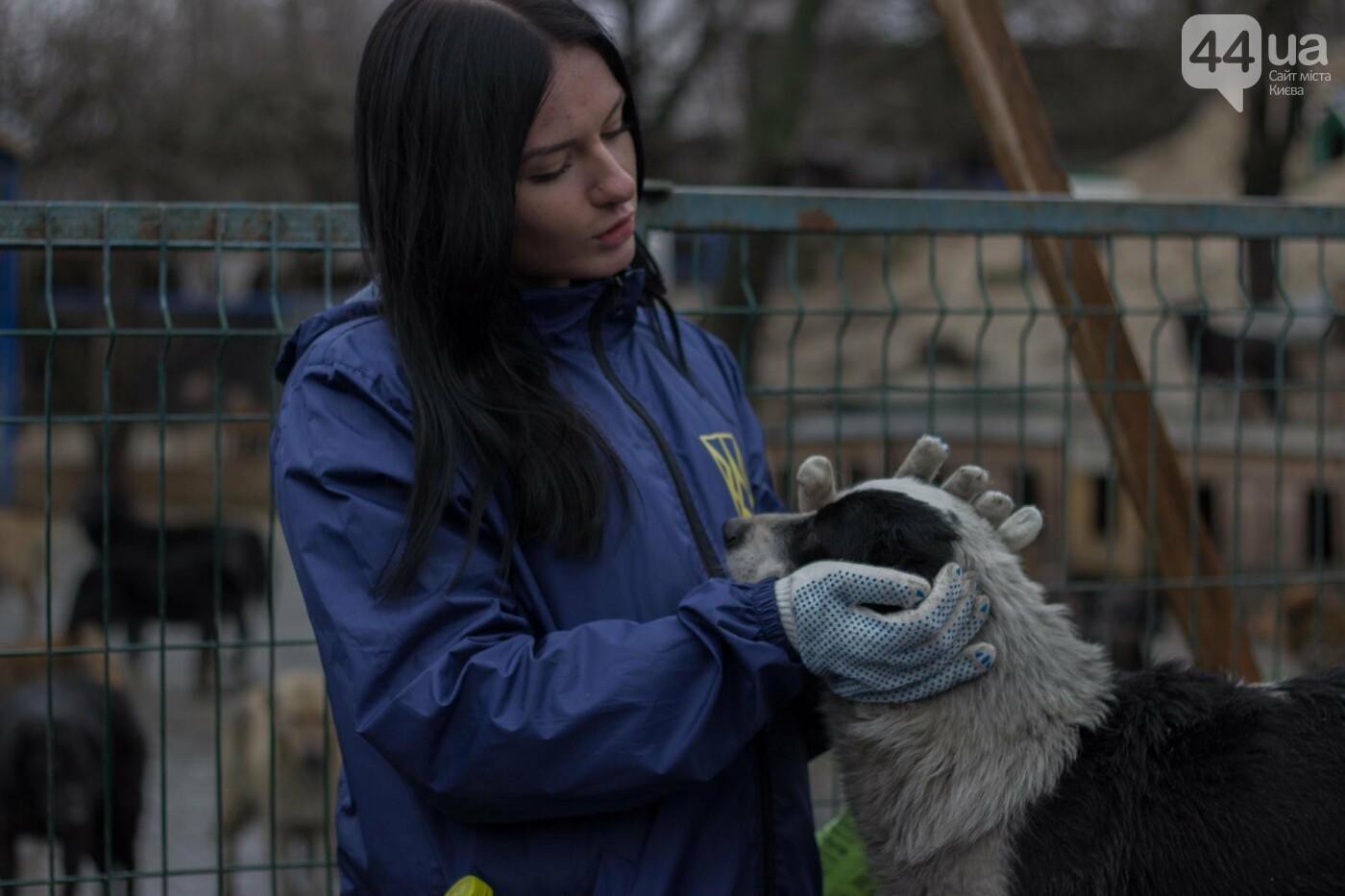 В приюте для животных неизвестные расстреливают и калечат собак, фото-6