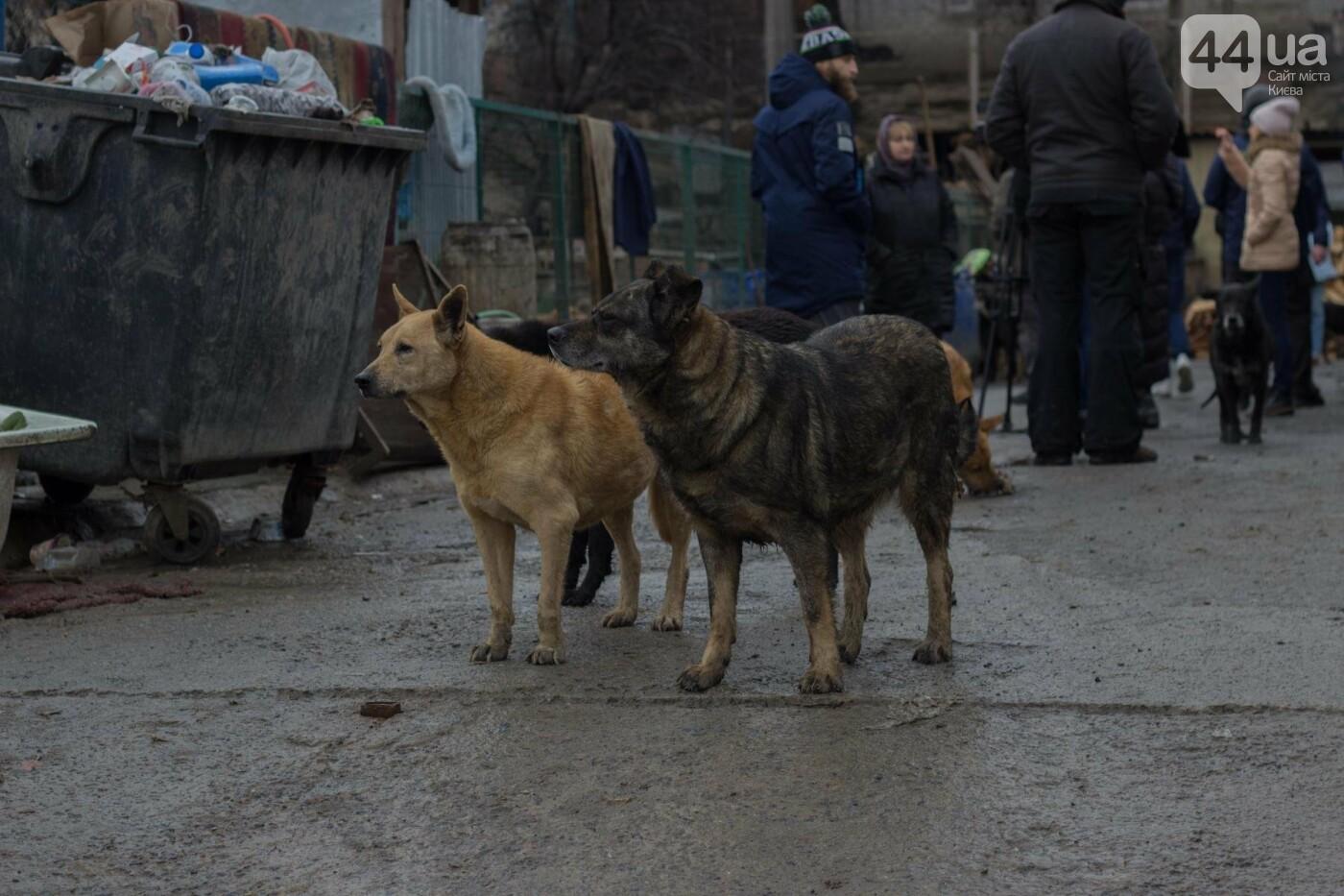 В приюте для животных неизвестные расстреливают и калечат собак, фото-27