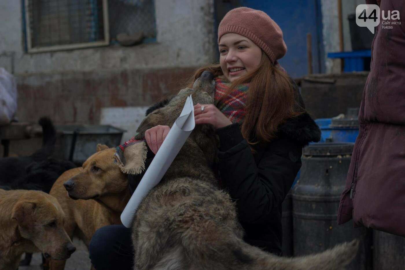 В приюте для животных неизвестные расстреливают и калечат собак, фото-22