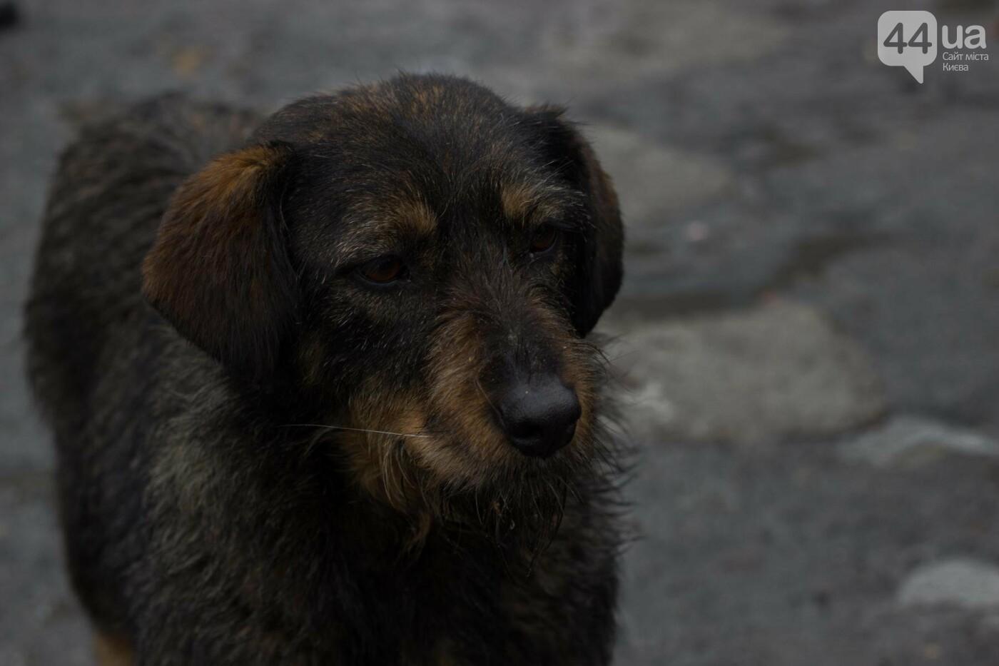В приюте для животных неизвестные расстреливают и калечат собак, фото-23