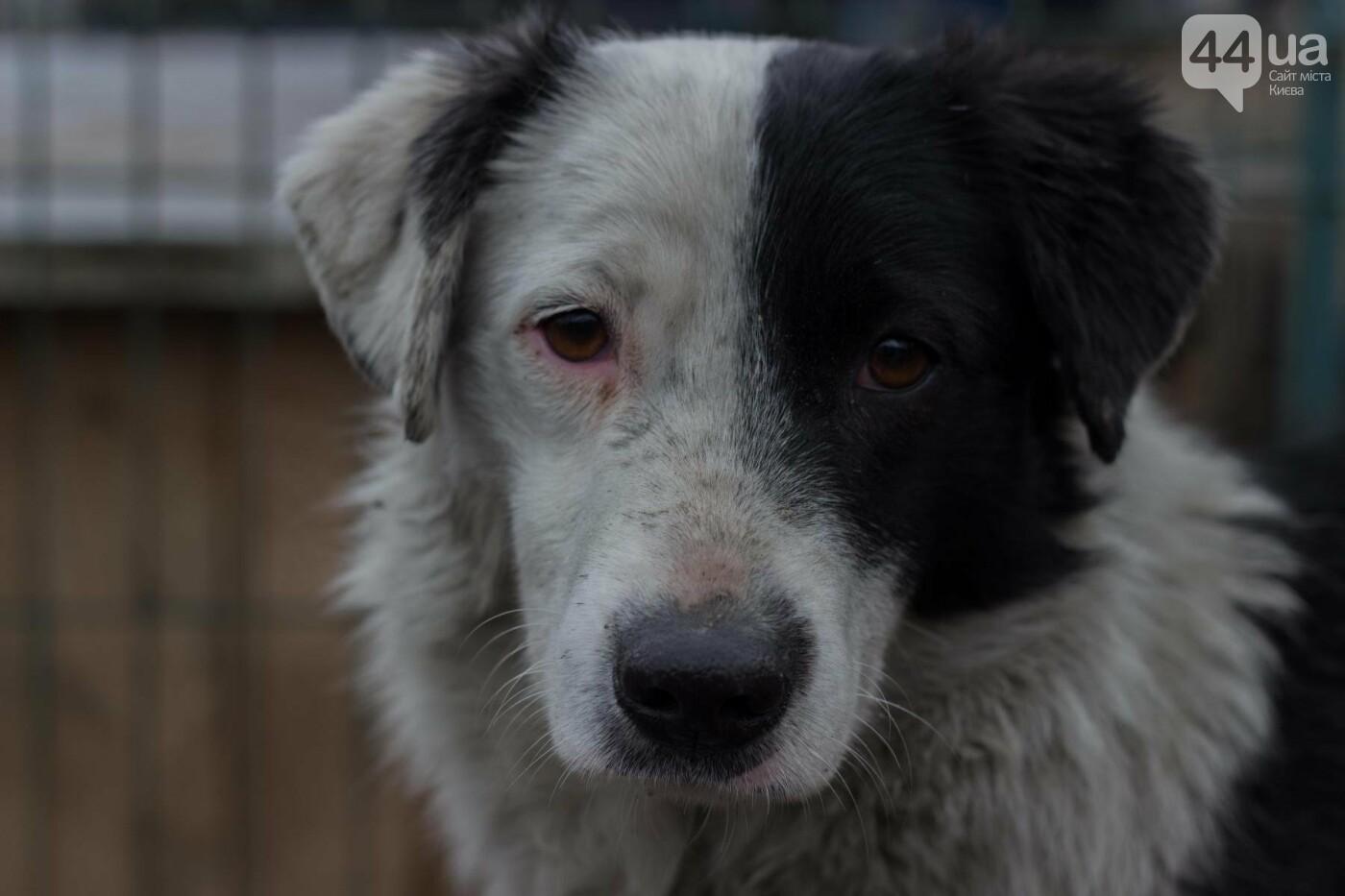 В приюте для животных неизвестные расстреливают и калечат собак, фото-9
