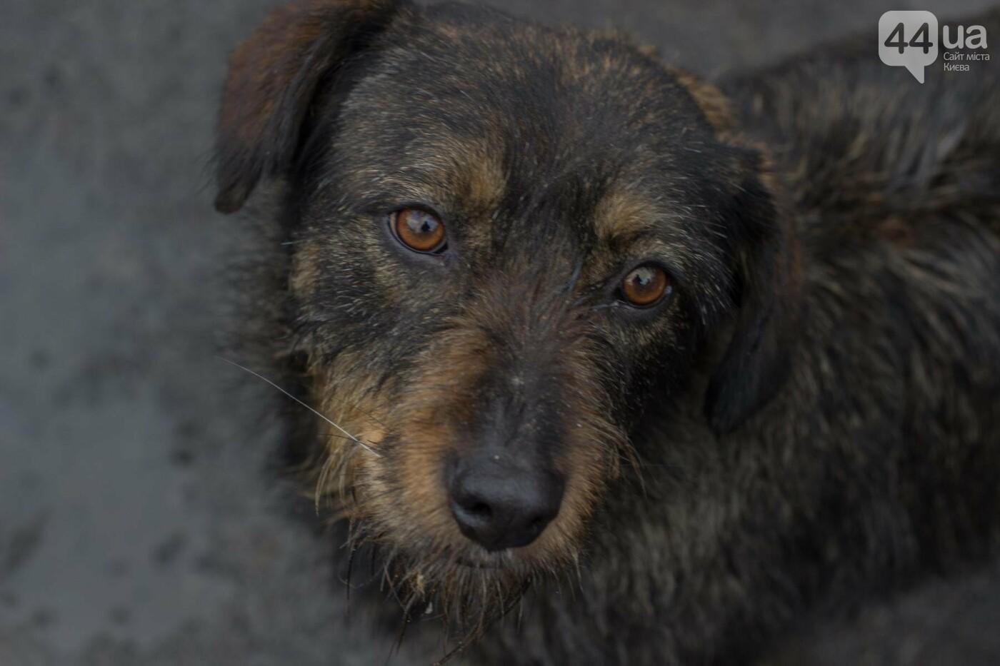 В приюте для животных неизвестные расстреливают и калечат собак, фото-10
