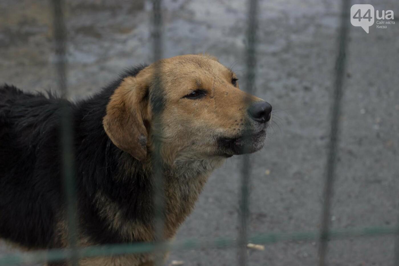 В приюте для животных неизвестные расстреливают и калечат собак, фото-15