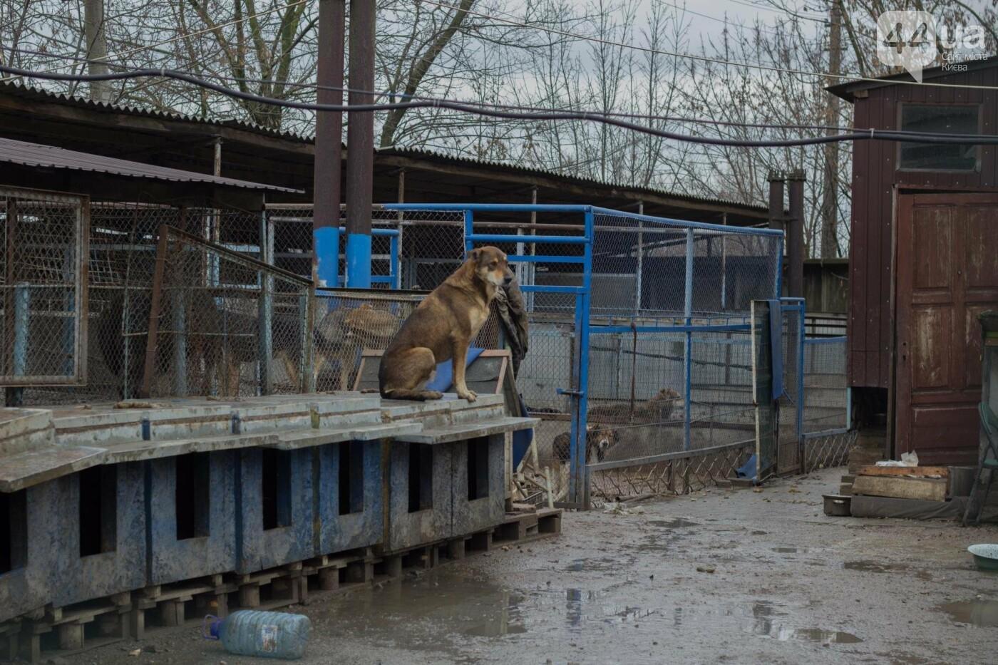 В приюте для животных неизвестные расстреливают и калечат собак, фото-28