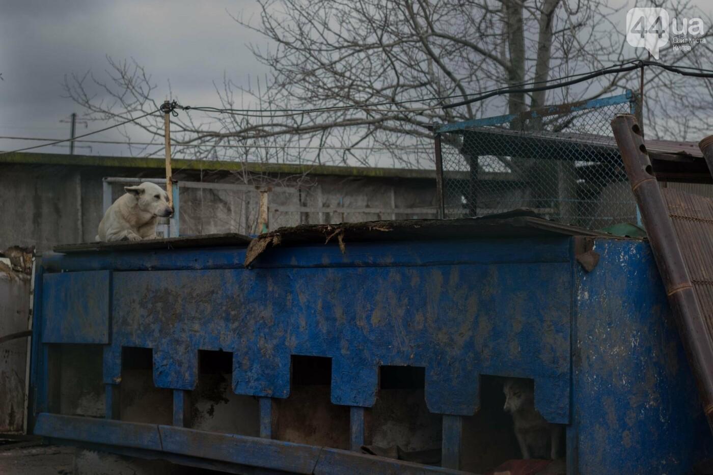 В приюте для животных неизвестные расстреливают и калечат собак, фото-11