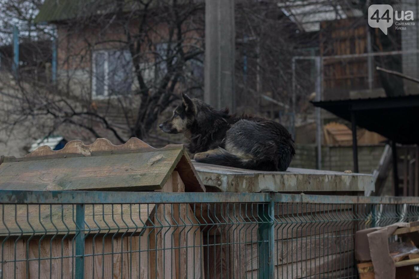 В приюте для животных неизвестные расстреливают и калечат собак, фото-17