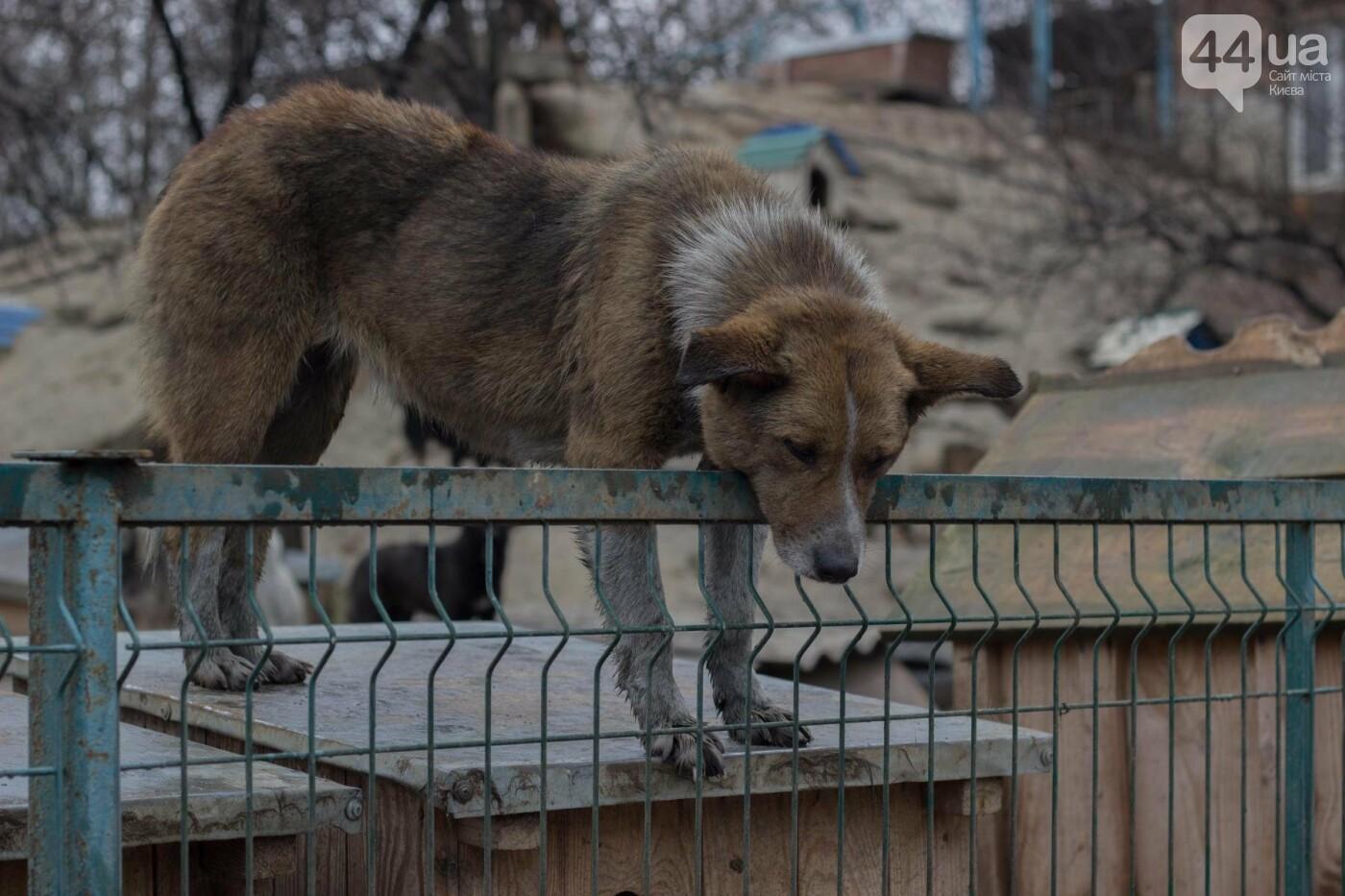 В приюте для животных неизвестные расстреливают и калечат собак, фото-20