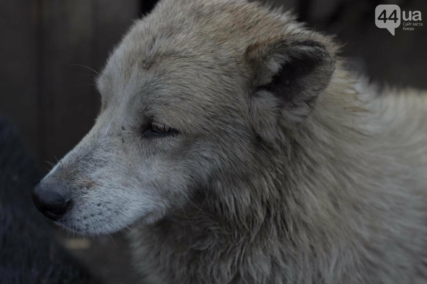 В приюте для животных неизвестные расстреливают и калечат собак, фото-4