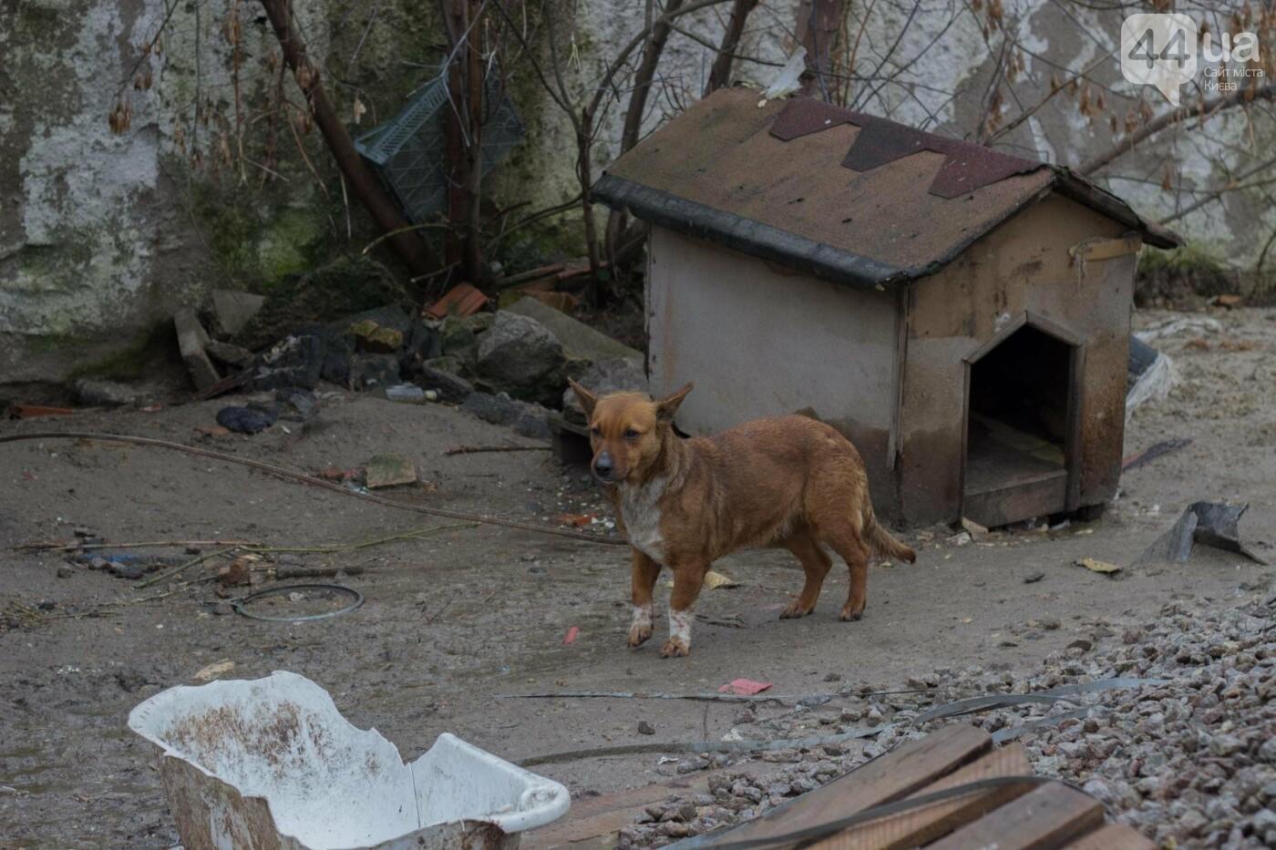 В приюте для животных неизвестные расстреливают и калечат собак, фото-19