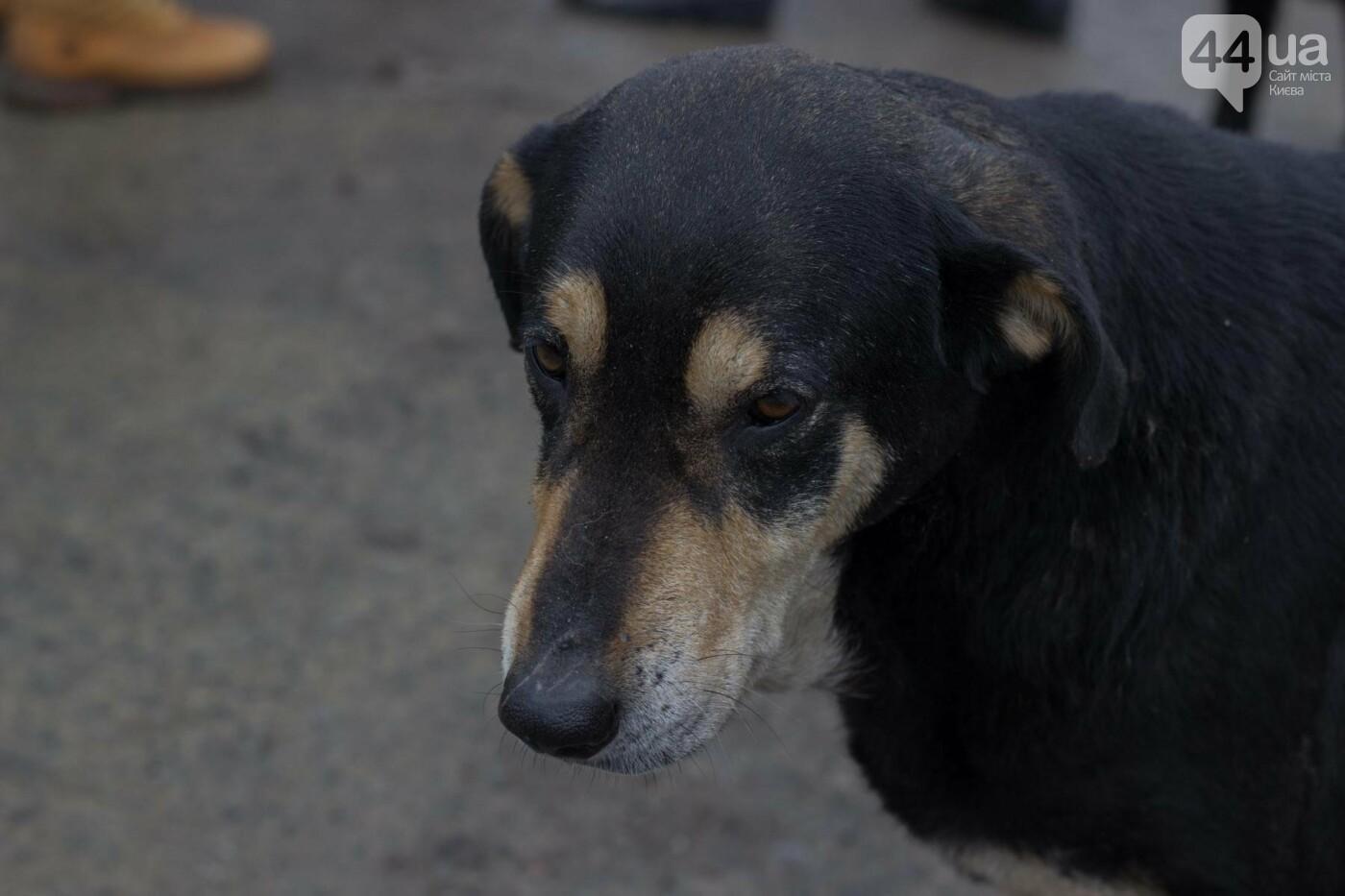 В приюте для животных неизвестные расстреливают и калечат собак, фото-24