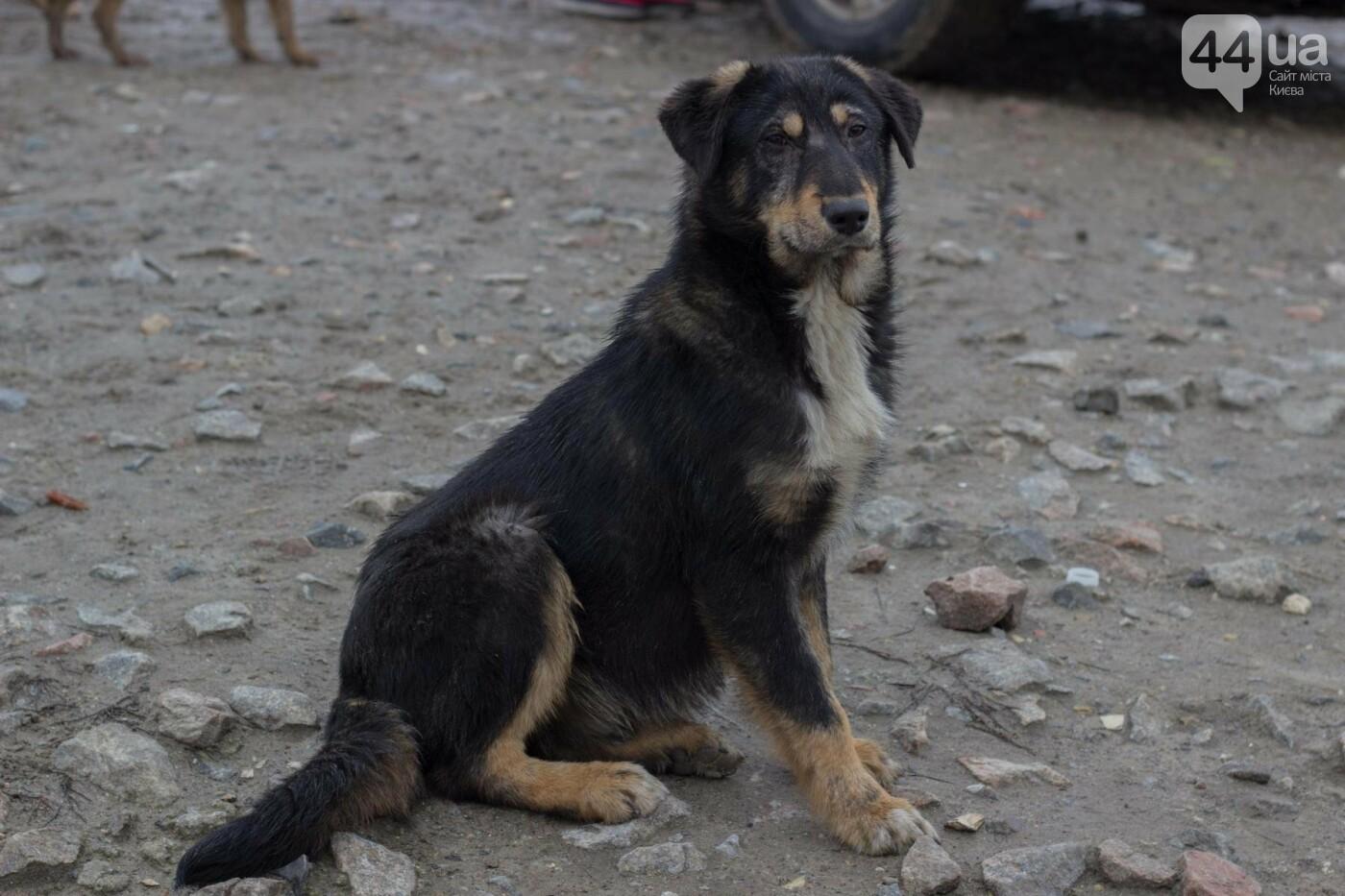 В приюте для животных неизвестные расстреливают и калечат собак, фото-26