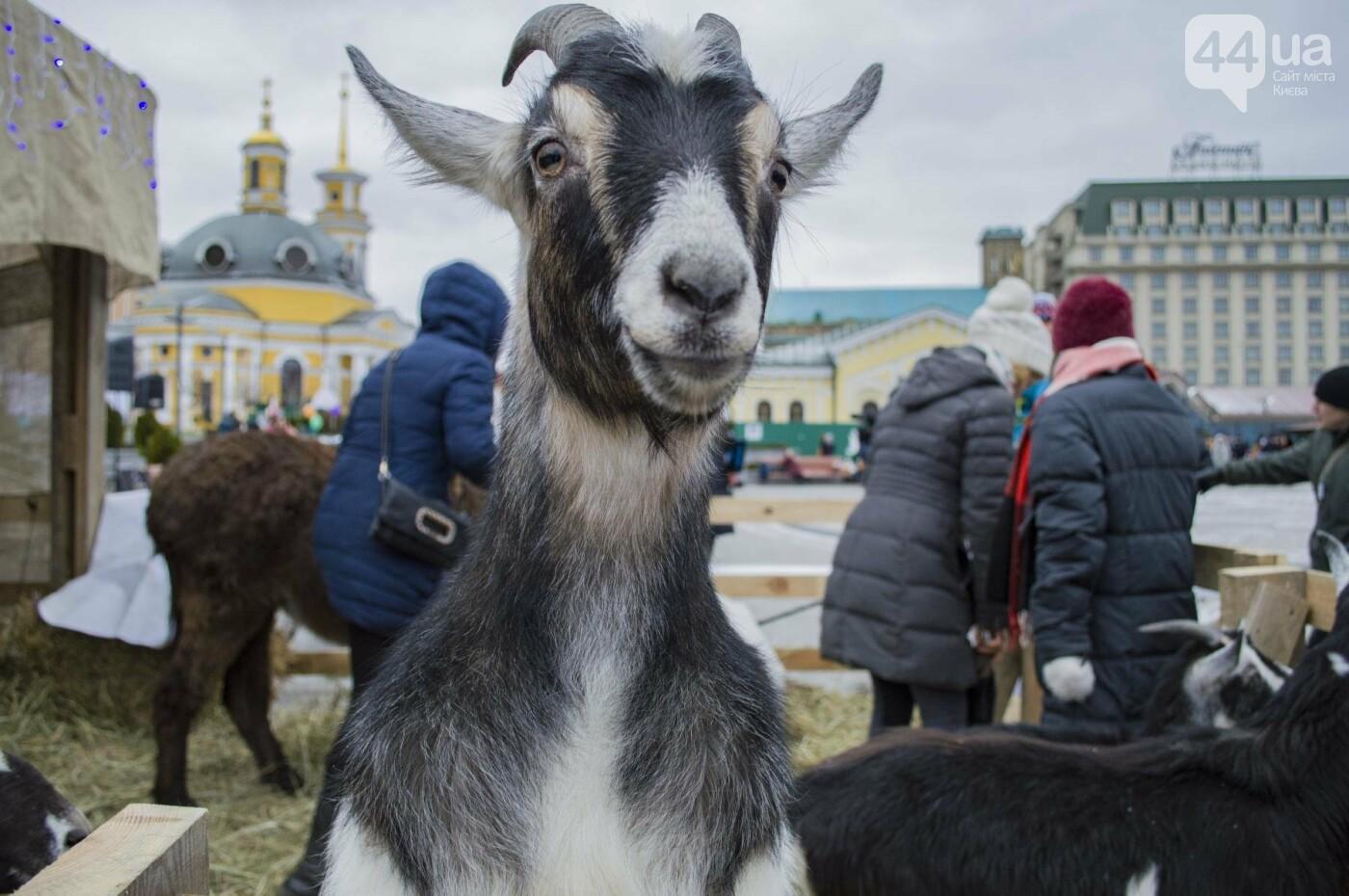 В Киеве прошел первый Рождественский фестиваль, как это было , фото-8