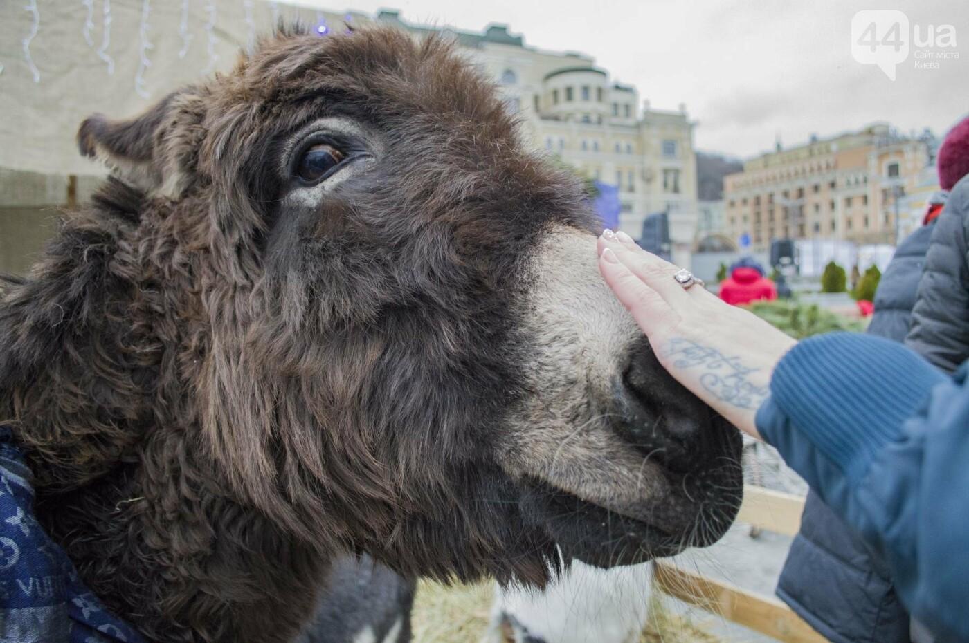 В Киеве прошел первый Рождественский фестиваль, как это было , фото-6
