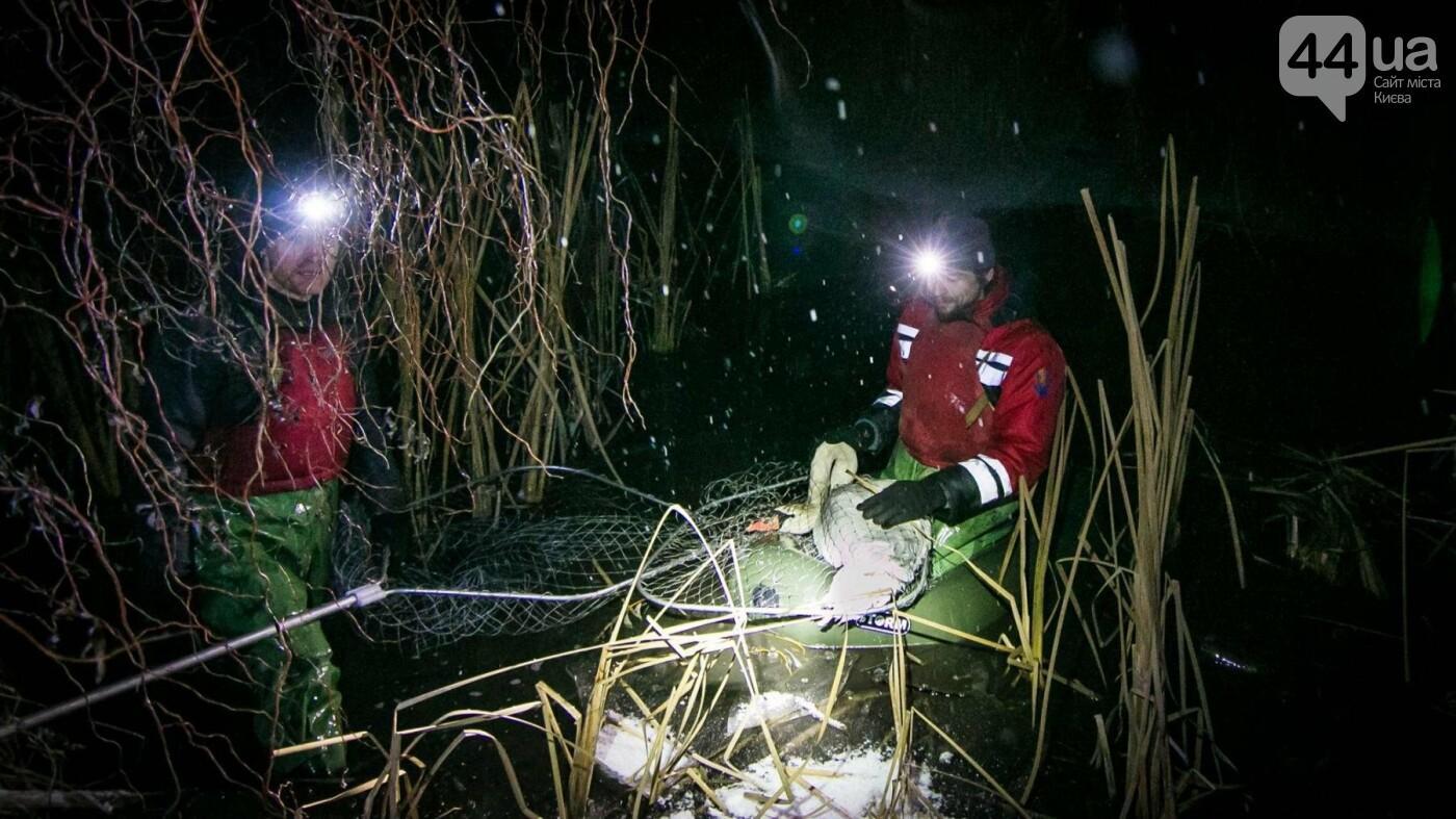 Под Киевом с замерзающего озера спасли лебедя (ФОТО), фото-4