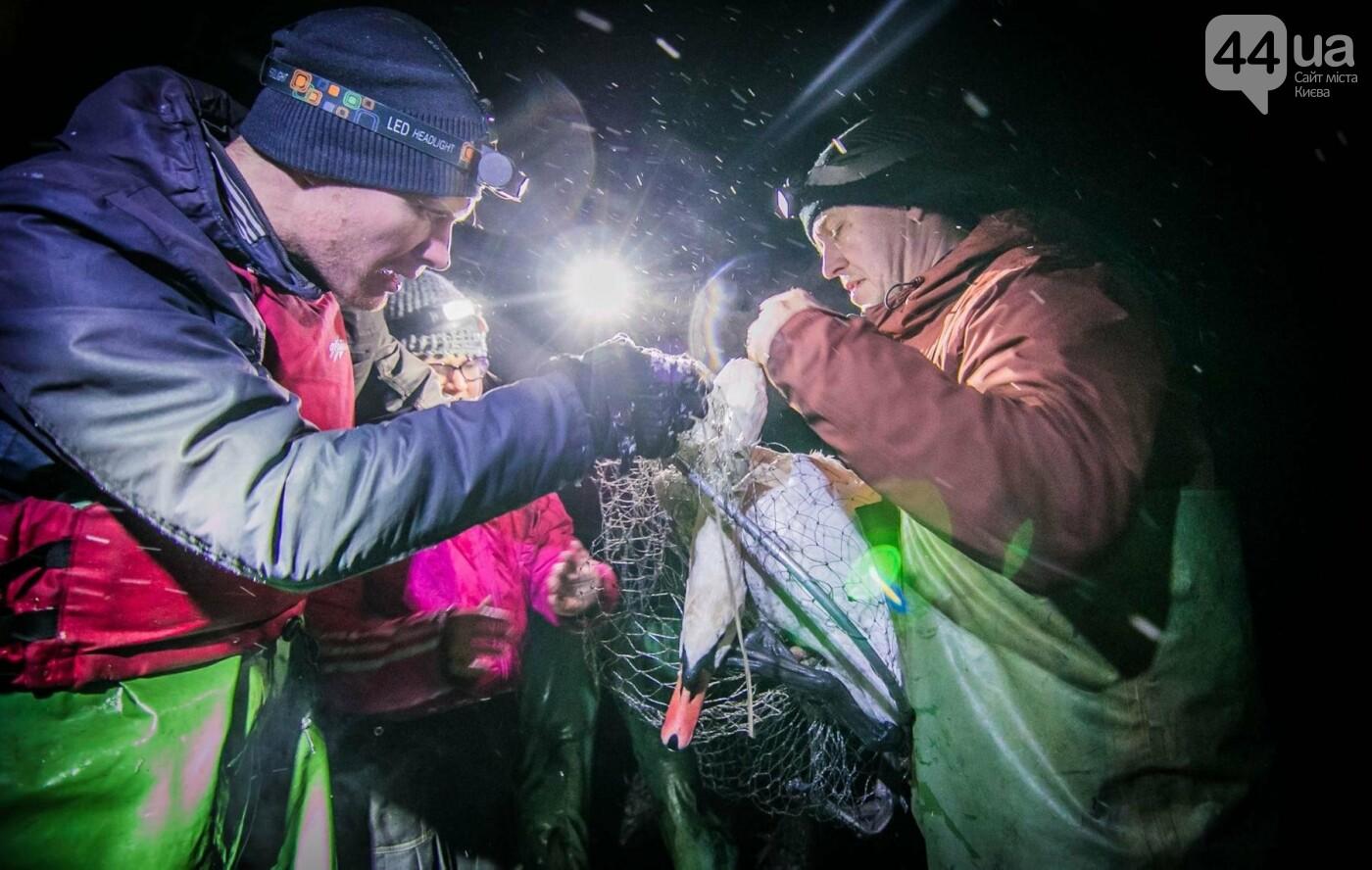 Под Киевом с замерзающего озера спасли лебедя (ФОТО), фото-5