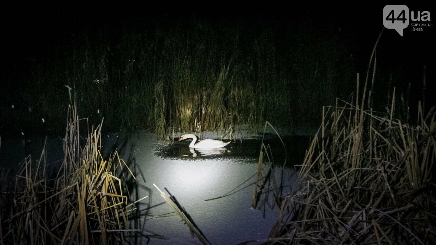 Под Киевом с замерзающего озера спасли лебедя (ФОТО), фото-3