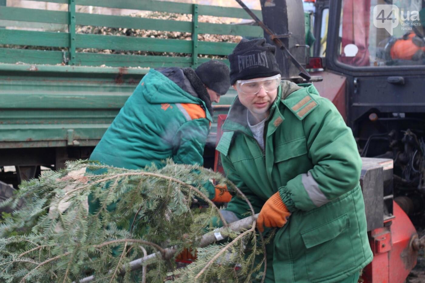 В Киеве утилизировали главную елку страны: как это было, фото-4
