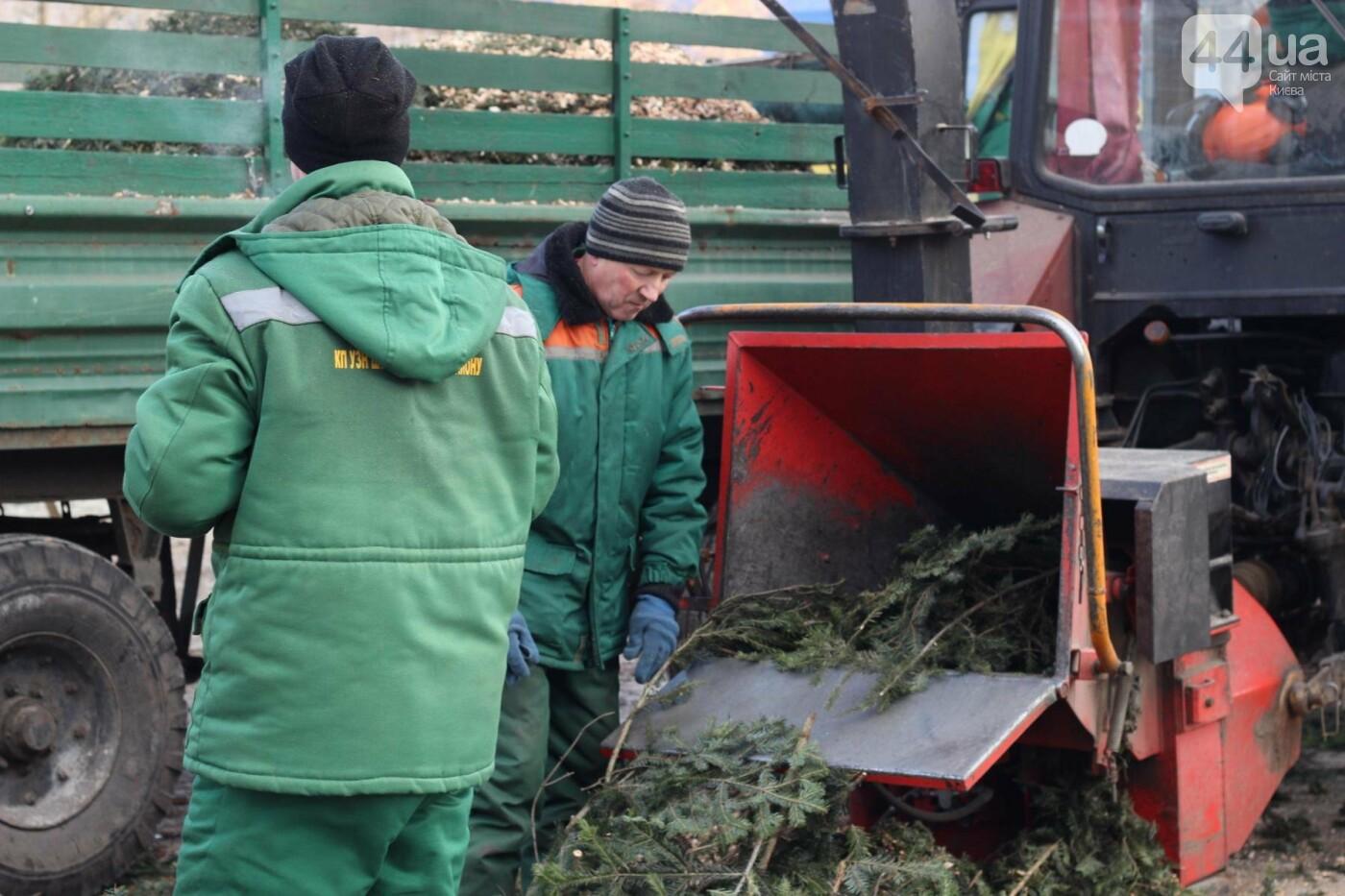 В Киеве утилизировали главную елку страны: как это было, фото-3