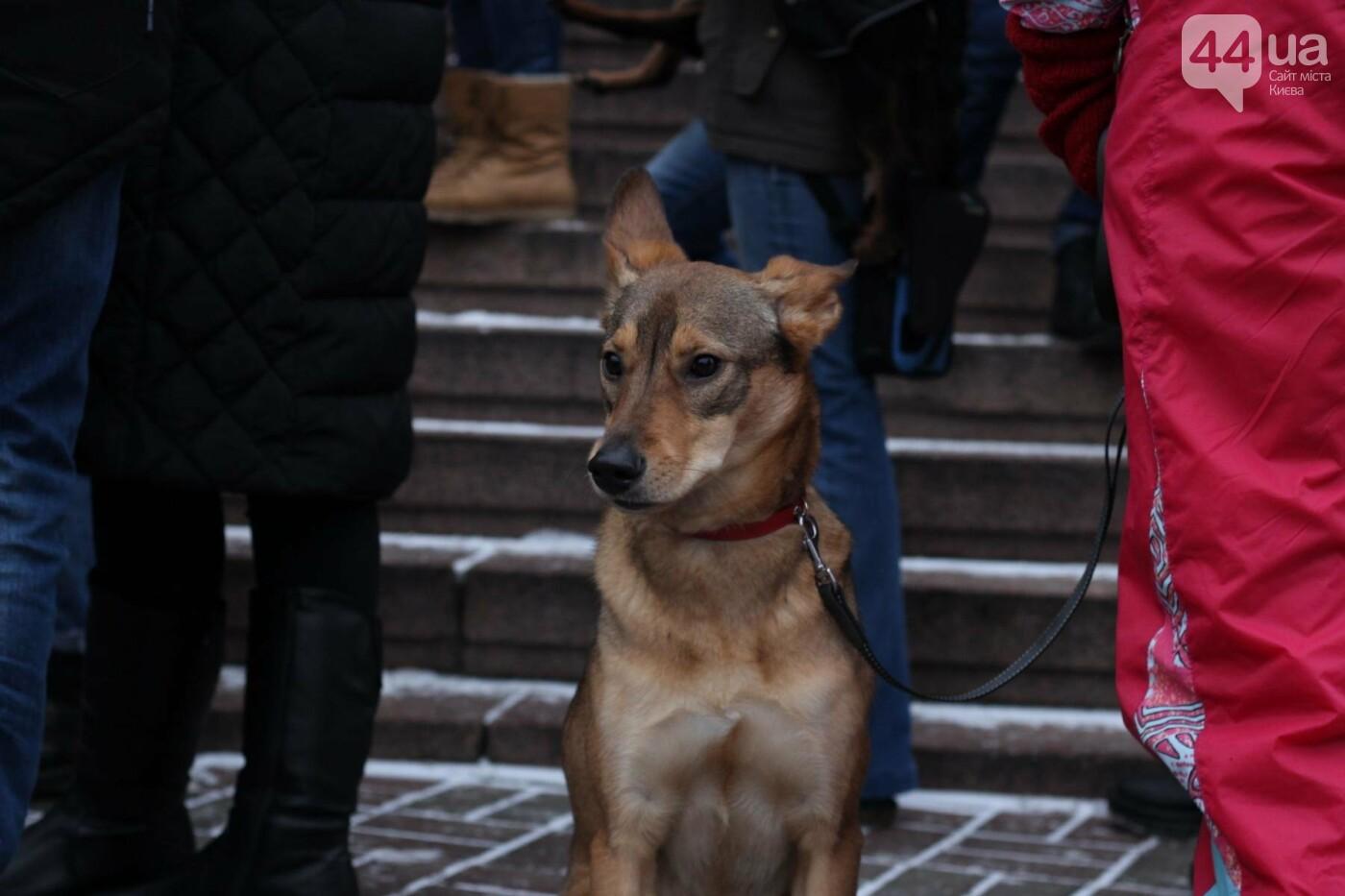 Цирк без животных: как в Киеве прошла акция протеста, фото-14